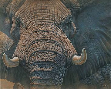 The Patriarch - Elephant by Jerry Ragg