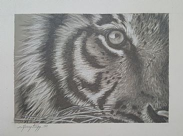 Tiger Eye Study - Tiger by Jerry Ragg