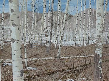 April near Hudson's Hope - A stand of birches in early spring in Northern B.C. by Ken  Nash