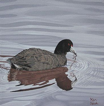 Cootie Pie - An American Coot floating on a pond by Ken  Nash