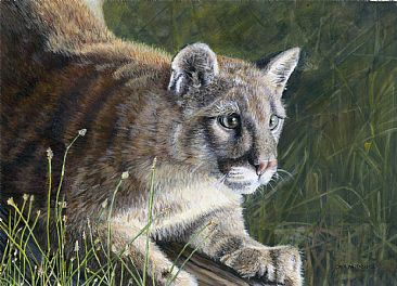 Pounce! - Juvenile Mountain Lion by Cher  Anderson