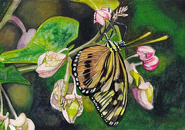 Monarch Beauty - Monarch Butterfly by Cher  Anderson