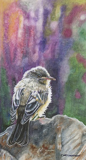 Sedona Colors - Black Phoebe Juvenile by Cher  Anderson