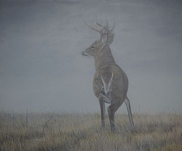 A Safe Place - White-tailed Deer by Colin Starkevich