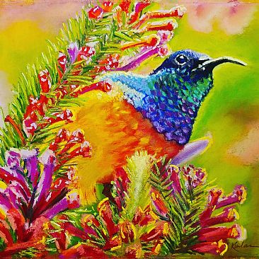Jewel of the Savannah - African Orange Breasted Sunbird by Whitney  Kurlan