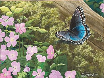 Spring Forest-Red-spotted purple -  by Frederick Szatkowski