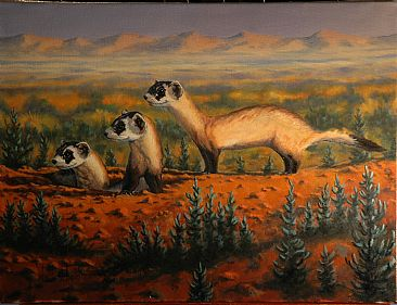 Who Goes There - Black-footed Ferret by Bill Scheidt