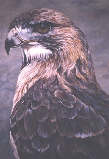 Hunter - Raptors- Red Tail Hawk by Kay Polito