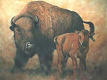 No_Bull - buffalo - American Bison by Kay Polito