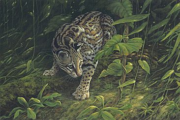 Rainforest Phantom - Cat-Ocelot by Kay Polito