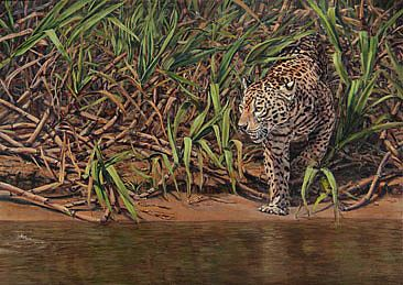 Hunting - jaguar hunting along the river bank by Candy McManiman