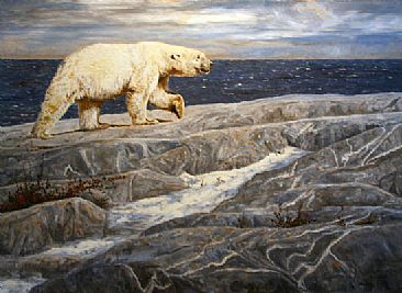 O Canada - Polar Bear by Linda Besse