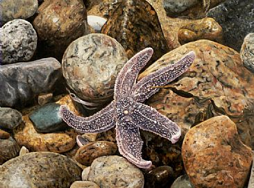 Star Light - Star Bright - Starfish by Linda Besse