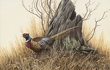 A Fine Fellow Indeed - Pheasant by Ron Orlando