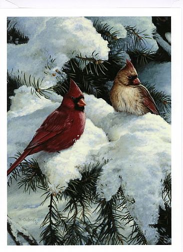 A New Day - Cardinals by Ron Orlando