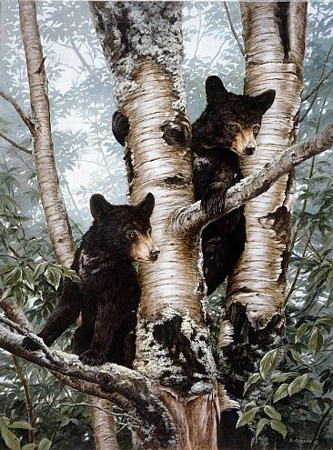 Looking for Mom - Black bear Cubs by Ron Orlando