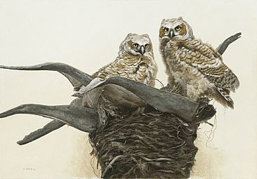 Not Quite Ready - Great Horned owlets by Ron Orlando