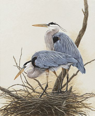 She Has the Last Say - Great Blue Heron by Ron Orlando