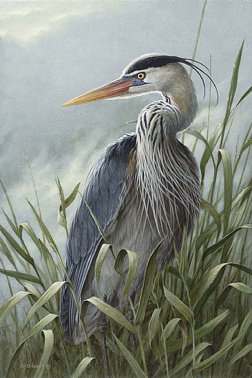 Tall Grass - Great Blue Heron by Ron Orlando