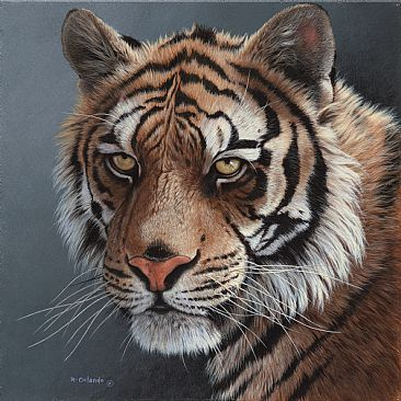 Tigers' Stare - Tiger by Ron Orlando