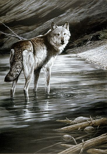 Broken Silence - Wolf by Ron Orlando