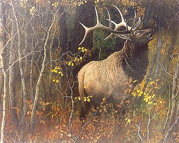 Lord of the Forest - Bull Elk by Michelle Mara