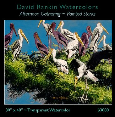 Afternoon Gathering - Painted Storks gathering in the top of an Acacia Tree by David Rankin