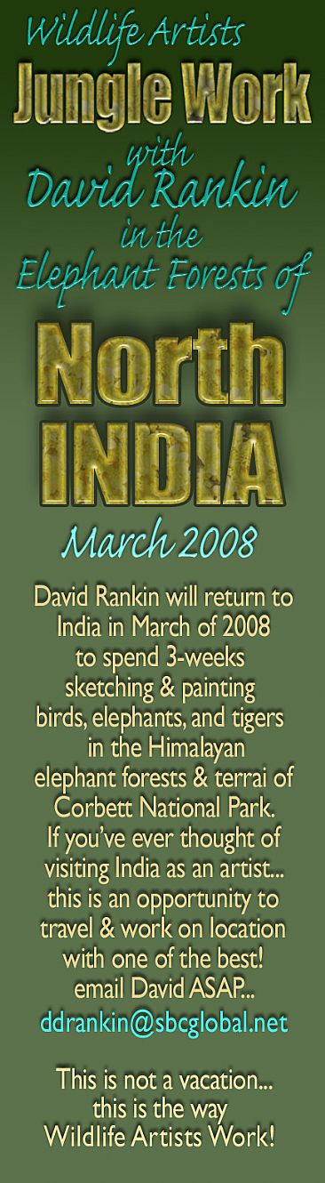 Jungle Work Training with David Rankin in India - Opportunity for artists to explore & paint India's elephants with David Rankin by David Rankin