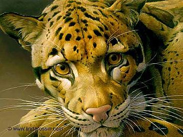A Leopard to Gaze At / Canvas Giclée - Clouded Leopard by Linda Rossin