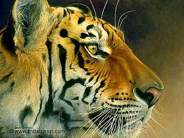 A Tiger to Touch / Canvas Giclée - Bengal Tiger by Linda Rossin