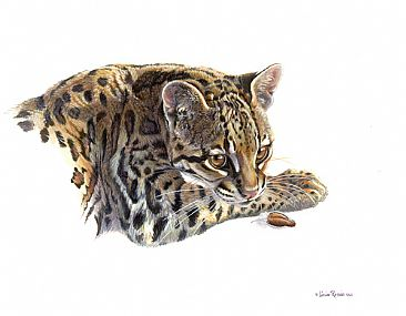 What Canary? - Young Ocelot by Linda Rossin