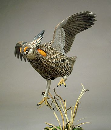 Battle on the Lek (View 2) - Greater Prairie Chicken by Patrick Godin