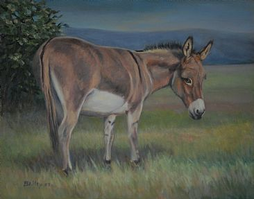 Daisy - Domestic Sicilian Donkey by Tucker Bailey