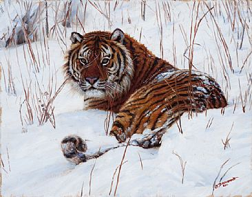 Stripes in the Snow -  by John Banovich