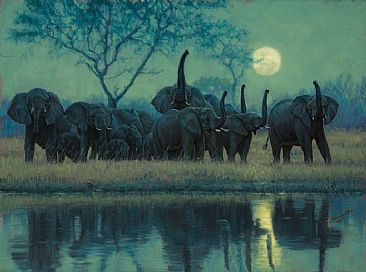 Testing the Night Wind - Elephants by John Banovich