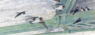 Down Under - Cliff Swallows by Beatrice Bork