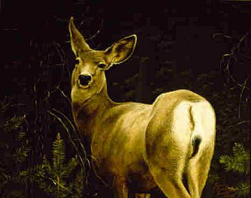 An Ear to the Wind  - Mule Deer by Jeanne Filler Scott