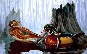 A New Beginning - Wood Ducks by Robert Kray