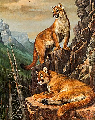 High Country Cats - Cougars by Robert Kray
