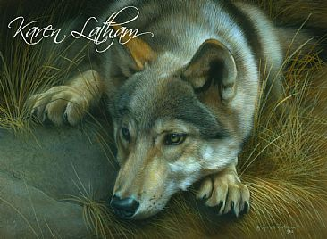 Contemplation - Young Wolf - Gray wolf by Karen Latham