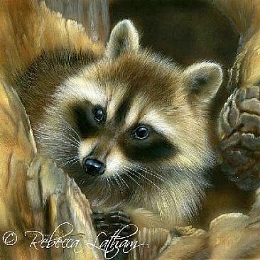 Raccoon - Painting Art by Rebecca Latham Raccoon Painting