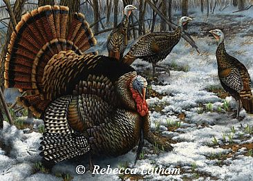 Springtime Gobblers - Eastern Wild Turkeys by Rebecca Latham