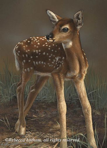 First Steps - Whitetail Fawn - Whitetail Fawn by Rebecca Latham
