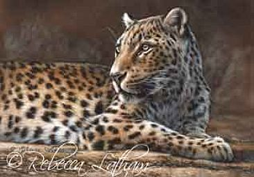 Asian Leopard - Leopard by Rebecca Latham