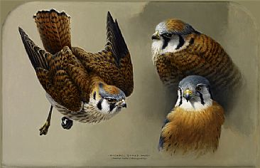 American Kestrel - Painting Art by Michael Dumas