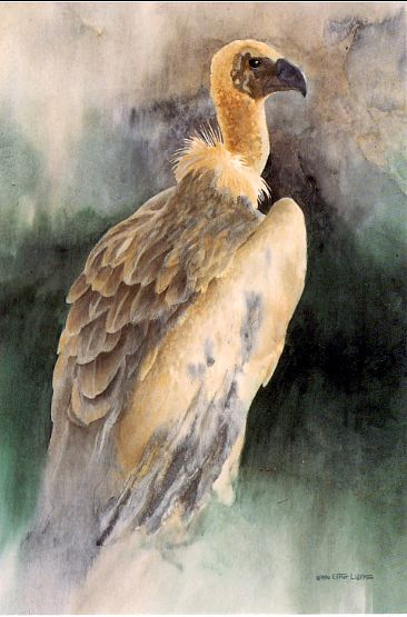 African White Backed Vulture Painting Art By Esther Lidstrom