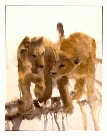 Young Lions - Year-old Lion Cubs by Esther Lidstrom