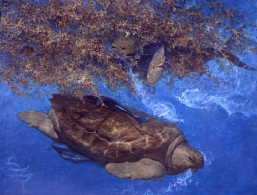 Loggerhead and Dolphins in Sargassum Weed - turtle dophin fish by Stanley Meltzoff