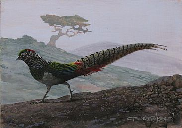 LAST OF THE AMHERSTS - Lady Amherst's Pheasant by Carel Brest van Kempen