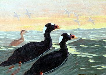 Surf Scoters off Montauk Point - Surf Scoters in the waters off Montauk, New York by Stephen Quinn